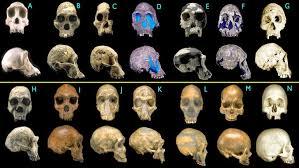 Картинки по запросу Эволюция человека