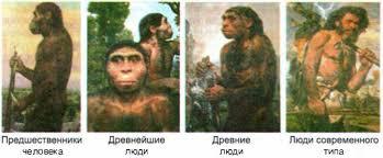 Картинки по запросу Эволюция морфология человека