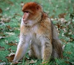 Картинки по запросу отряд приматов делится на подотряды