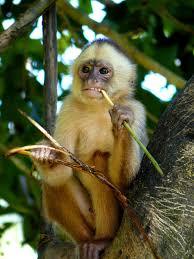 Картинки по запросу Приматы обезьян