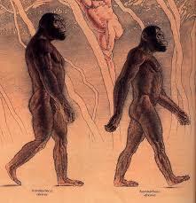 Картинки по запросу Развитие мозга эволюционным способом