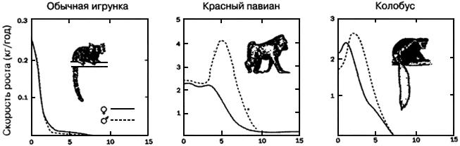 Рис. VI. 4. Различия в динамике ростовых кривых у представителей разных видов приматов: - обычной игрунки (Callithrix jacchus), красного павиана (Papio papio), колобуса (Colobus guereza)