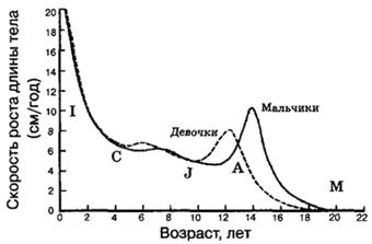 Рис. VI. 6. Идеальные кривые скорости роста длины тела здоровых мальчиков и девочек, показывающие постнатальные изменения ростовых стадий. Четко выражены полуростовой и подростковый скачки роста. По наступлению всех стадий девочки опережают мальчиков. I - младенчество; С - детство; J - ювенильный период; А - подростковый период; М - взрослая стадия