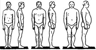 Рис. VII. 1. Основные типы телосложения мужчин (по схеме В.В. Бунака): 1 - грудной, 2 - мускульный, 3 - брюшной